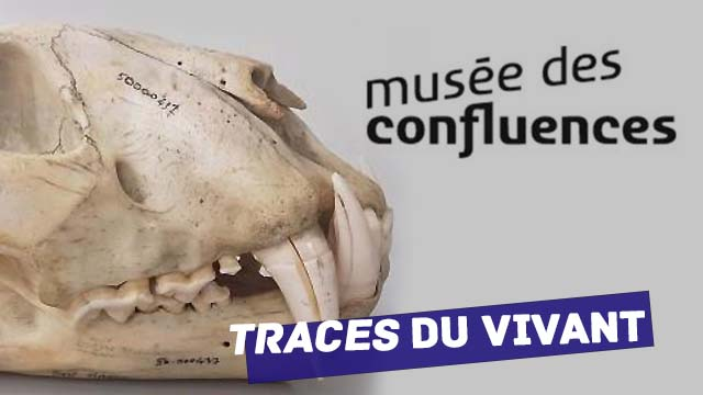 05 Février 2020 - Musée des Confluences : une exposition sur l'utilisation de l'os à travers le temps du 07/02/2020  au 06/12/2020